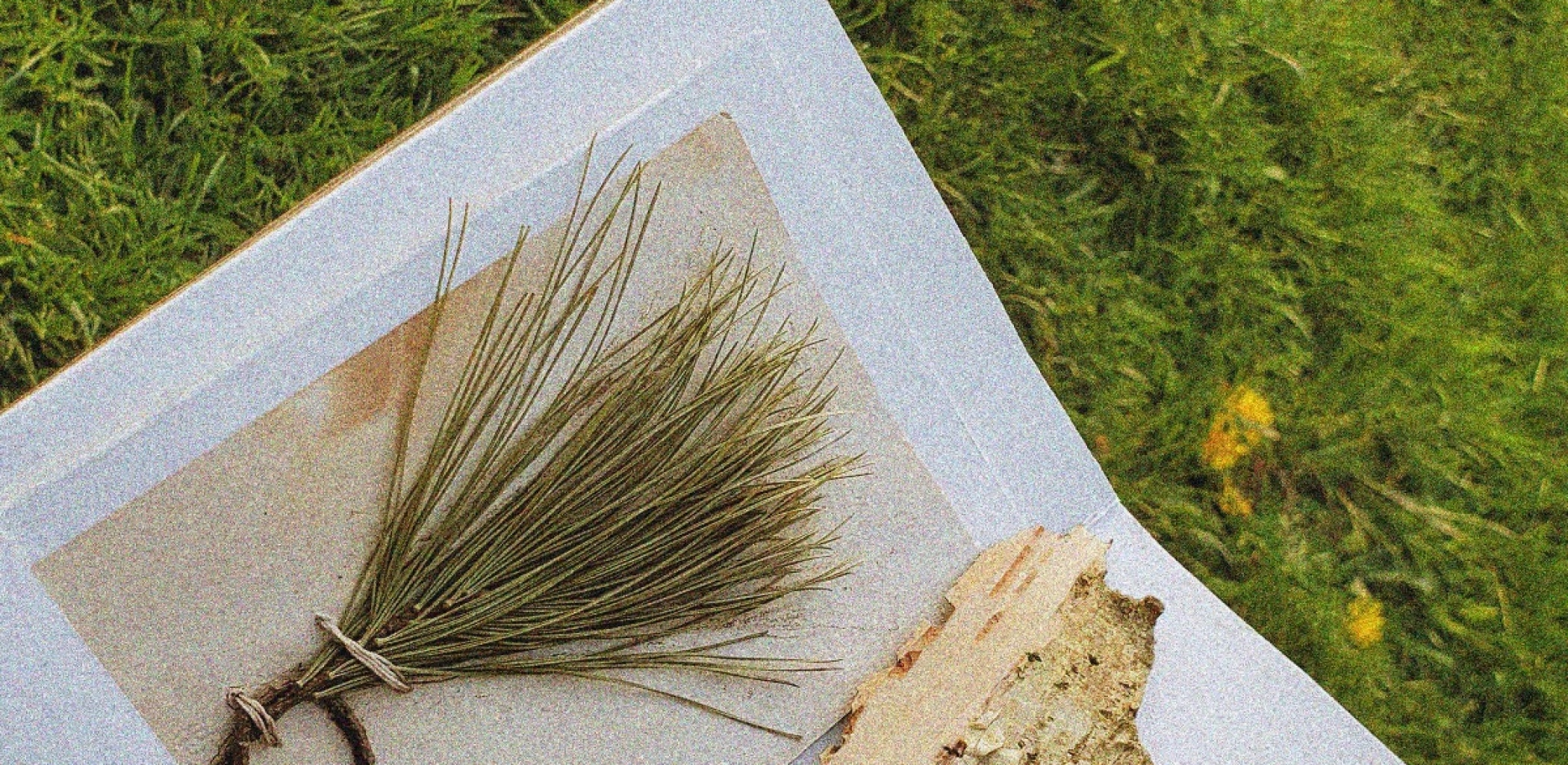 close-up photo of a handmade paper accordion book. Pine needles have been stitched into it, and a piece of birch bark sits on the page beside it.